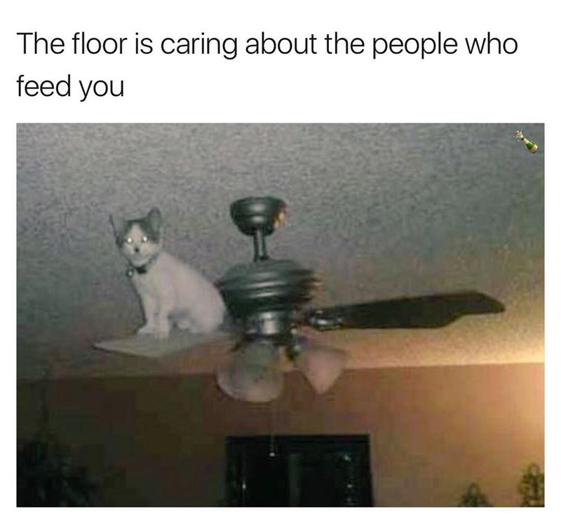 Funny meme about how cats don't care about their owners, in the style of a floor is lava meme.