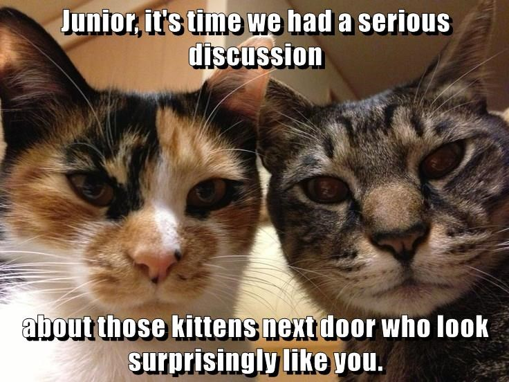 Cat - Junior, it's time we had a serious discussion about those kittens next door who look surprisingly like you.