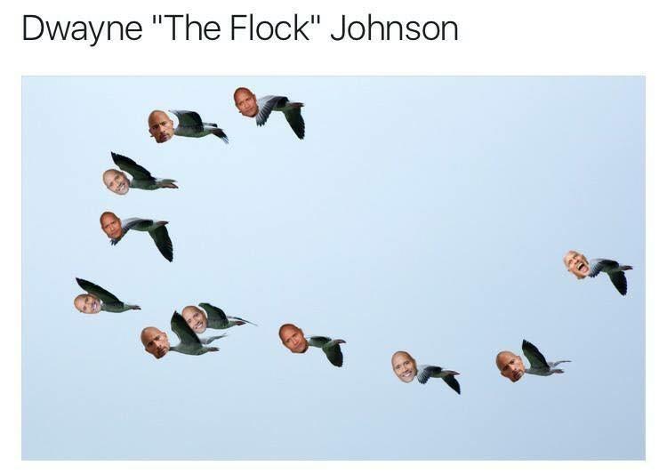 """Bird - Dwayne """"The Flock"""" Johnson"""