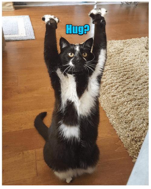 Cat - Hug?