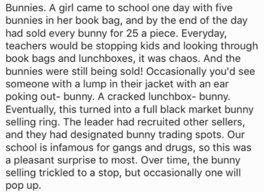 Text - Bunnies. A girl came to school one day with five bunnies in her book bag, and by the end of the day had sold every bunny for 25 a piece. Everyday, teachers would be stopping kids and looking through book bags and lunchboxes, it was chaos. And the bunnies were still being sold! Occasionally you'd see someone with a lump in their jacket with an ear poking out-bunny. A cracked lunchbox- bunny Eventually, this turned into a full black market bunny selling ring. The leader had recruited other