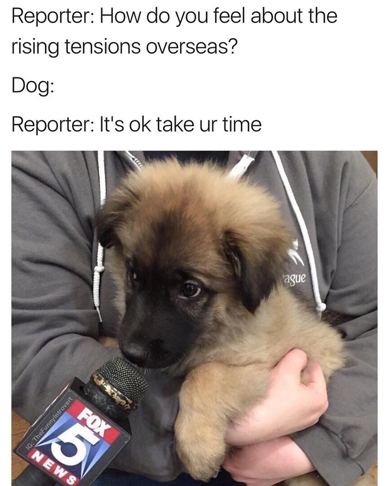 Funny meme about a dog being asked a question by a news reporter.