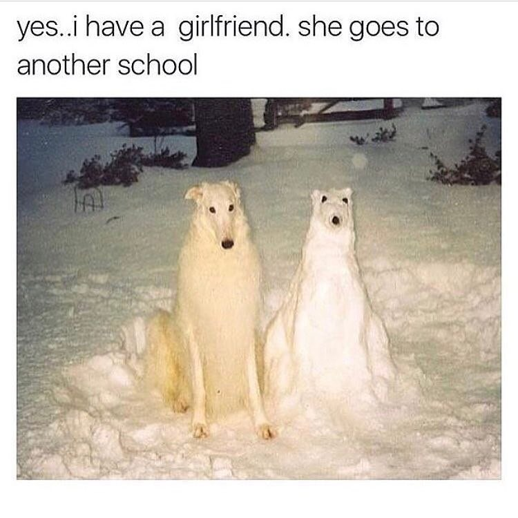 Funny meme with a white dog next to a snow version of the same dog, says yes I have a girlfriend but she goes to another school. A reference to people having fake girlfriends.