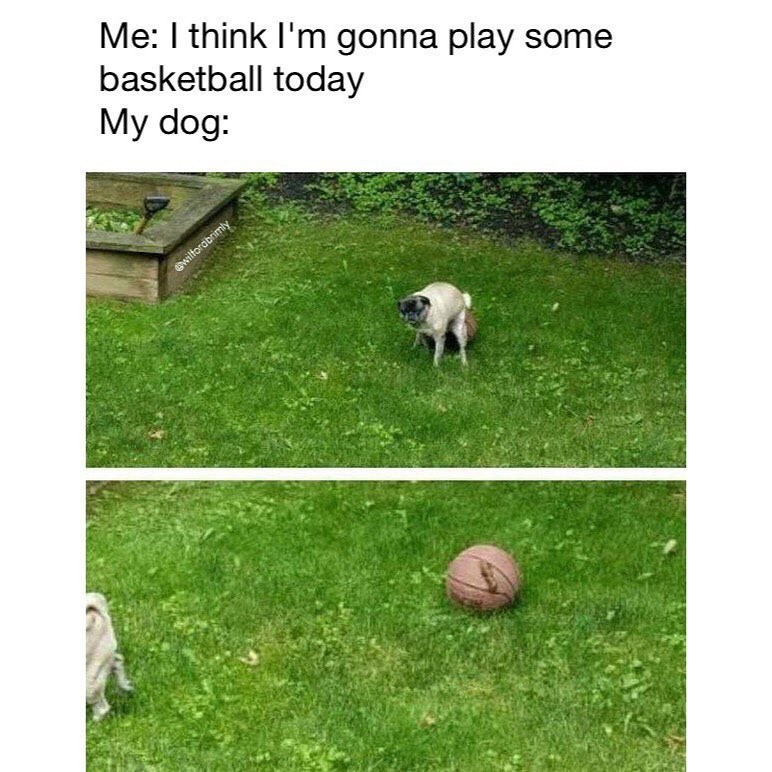 Funny meme about someone who wants to play basketball, his dog takes a shit on the basketball.