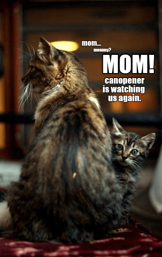 Just ignore him  We're cats  It's what we do  - Lolcats
