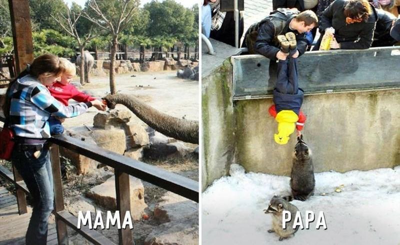 Tree - MAMA PAPA
