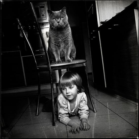 Andy Prokh body guard cat standing firm on a chair.