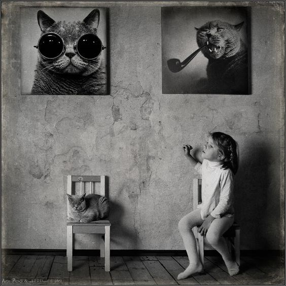 Andy Prokh is clearly a cat photographer