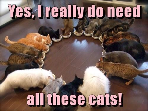 Photo caption - Yes, I really do need all these cats!