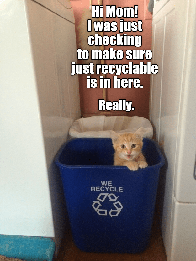 Cat - Hi Mom! I was just checking to make sure just recyclable is in here. Really. WE RECYCLE