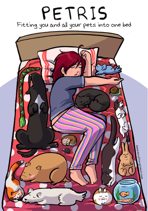 photo of owner trying to fit her pets in one bed