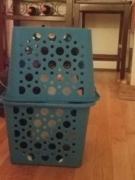 monday meme of cat hiding in a box with his eyes perfectly aligned with the circles.