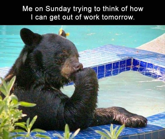 Funny monday meme of a bear in deep thought in the pool captioned as me on Sunday thinking of how to get out of work on Monday.