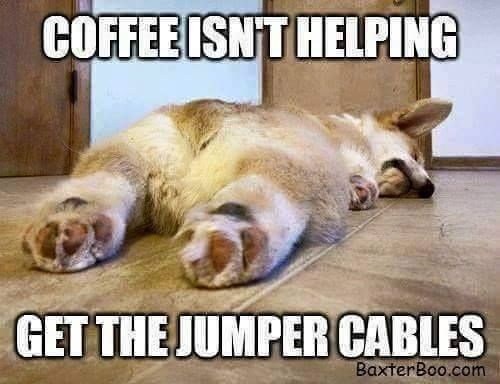 monday meme of passed out Corgi that has caption COFFEE NOT WORKING, GET JUMPER CABLES