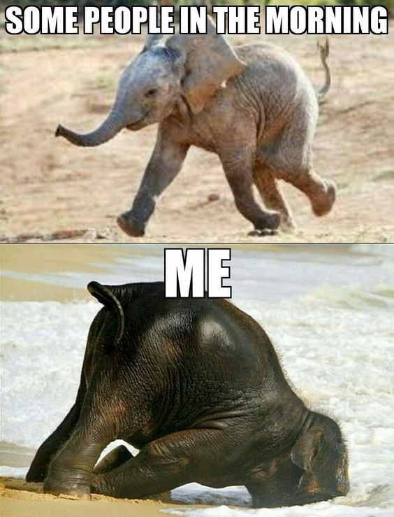 monday meme of happy baby elephant to show how some people are in the morning, VS Me who is like the elephant with his face planted in the ground
