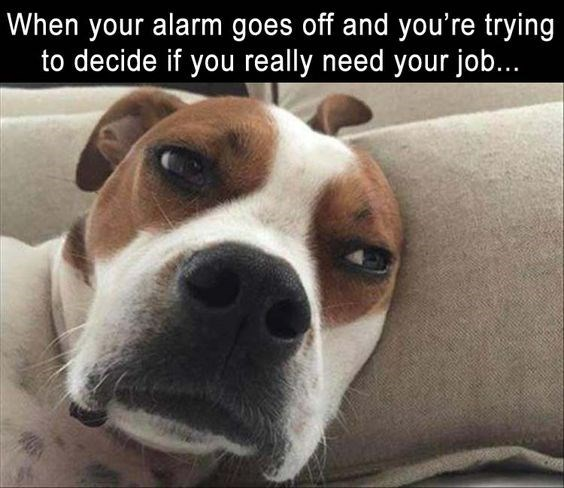 Tired dog in deep thought for meme about how you feel when the alarm goes off and you try to decide if you really need your job.