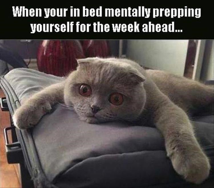Cat with eyes wide open lying face down with forearms wide open captioned as When Your In Bed Mentally Prepping Yourself for the Week Ahead.