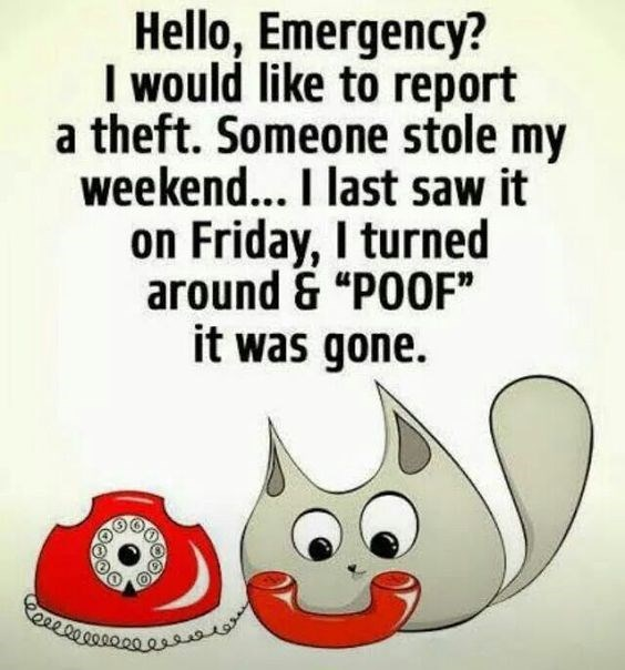 monday meme of a very cute cat cartoon of kitty making a phone call to Emergency to report his weekend stolen.