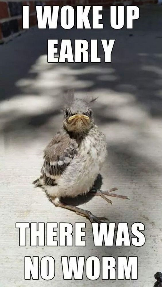 Monday memes | birb meme of angry bird complaining that he woke up yet did not receive any worm.