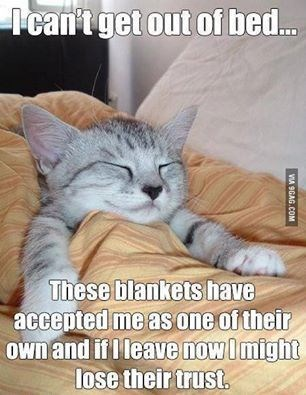 Cat meme about not wanting to get out of bed because the blankets have accepted me as one of their own and leaving now would lose that trust.