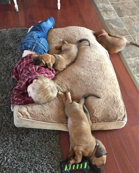 Kid passed out on a big sofa pillow on the floor with dogs passed out along it too.