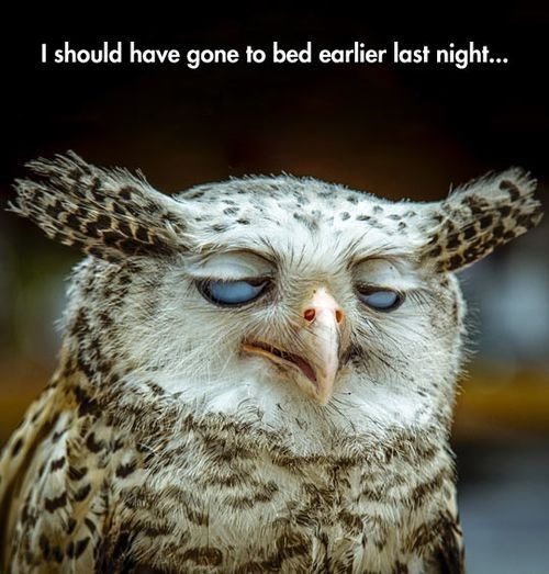 Very tired looking owl captioned as I should have gone to bed earlier last night - Funny Monday Meme