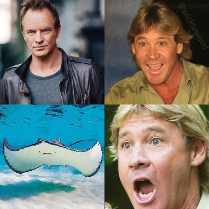 Funny and somewhat offensive reaction meme, photo of Sting from the police - steve irwin smiles, photo of a stingray, steve irwin unhappy. This is a joke because steve irwin was killed by a stingray.