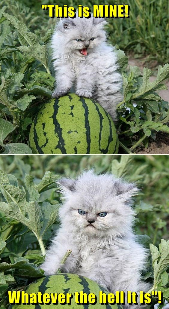 cat meme watermelon - 9045940480