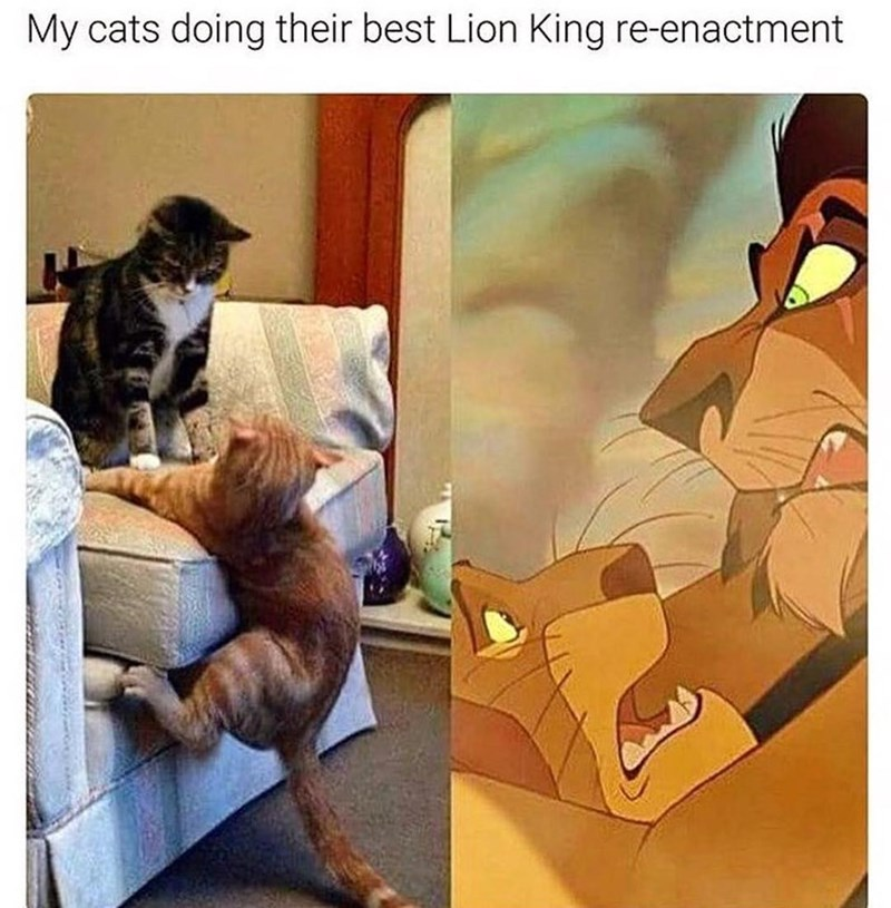 Funny meme of two cats that seem to be reenacting Mufasa's death scene from lion king.