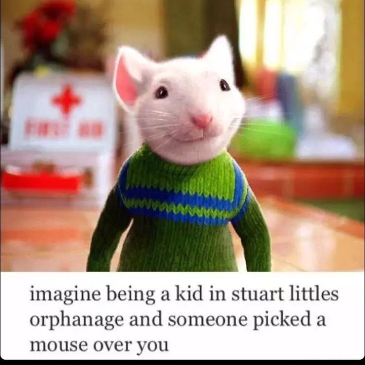 Funny meme that poses the question of how it would feel if you were up for adoption but someone chose Stuart Little, a mouse, over you.