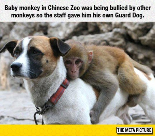 A picture of a monkey riding on the back of a dog
