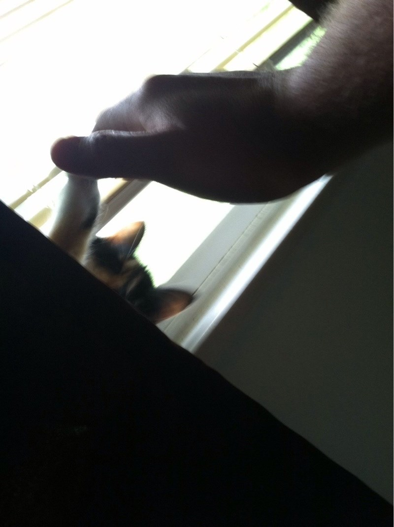 Hiding cat give high five to