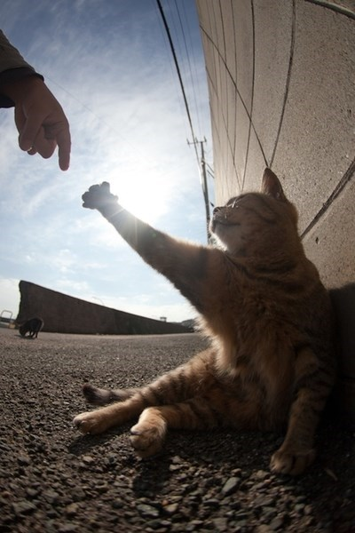 Cat reaching to with extreme pushing it to almost touch the lazy hand of a human, against the blazing sun in the sky, reminiscent of the ceiling of the Sistine Chapel.
