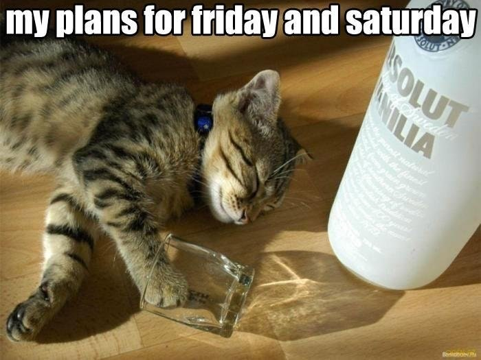 A cat lying on the floor passed out to show my plans for Friday and Saturday.