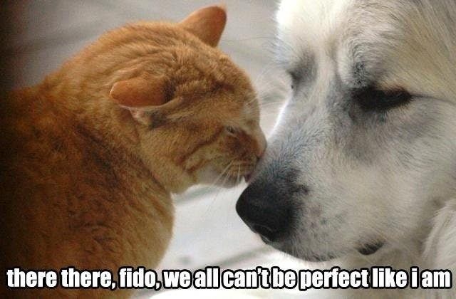 an orange cat licking the dog saying that its going to be ok, not everyone is as perfect as a cat is