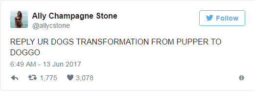 Text - Ally Champagne Stone Follow @allycstone REPLY UR DOGS TRANSFORMATION FROM PUPPER TO DOGGO 6:49 AM 13 Jun 2017 t1,775 3,078