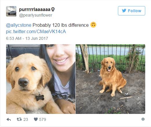 Dog - purrrrrlaaaaaa Follow @pearlysunflower @allycstone Probably 120 lbs difference pic.twitter.com/CMaeVK14cA 6:53 AM - 13 Jun 2017 t23 579