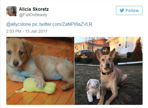 Dog breed - Alicia Skoretz Follow @FullOnBeauty @allycstone pic.twitter.com/ZaNPWaZVLR 2:03 PM - 13 Jun 2017