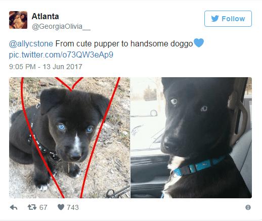 Canidae - Atlanta Follow @GeorgiaOlivia @allycstone From cute pupper to handsome doggo' pic.twitter.com/o73QW3eAp9 9:05 PM - 13 Jun 2017 t67 743