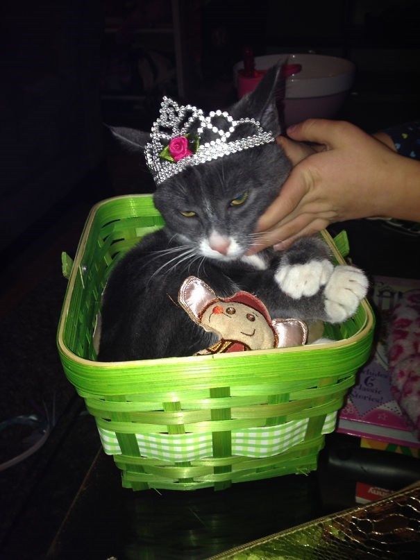 Cat - ude Clasic Soricd