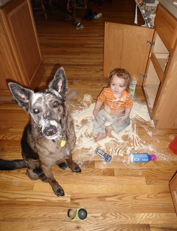 Dog - Dzico