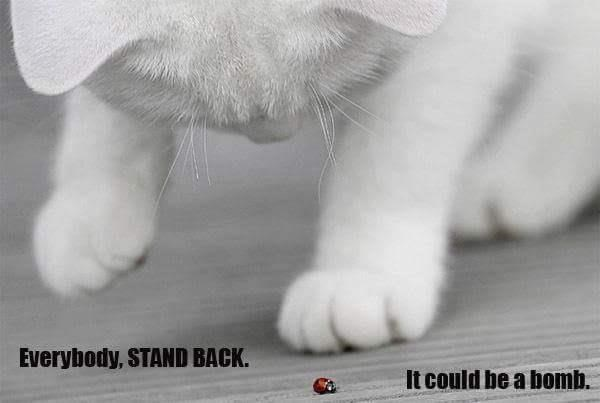 Cat meme of a white fluffy kitten warning that the little lady bug might be a bomb.