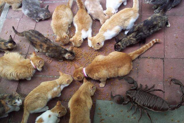 Bunch of cats eating food and one giant scorpian