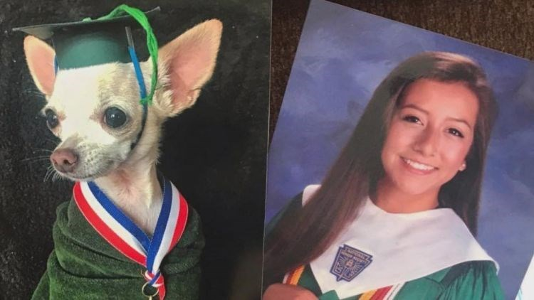 Picture of Dixie, the family chihuahua, wearing a cap and gown and swapped out of Marissa's picture.