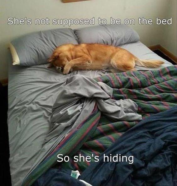 Dog thinks she is hiding by covering her eyes.