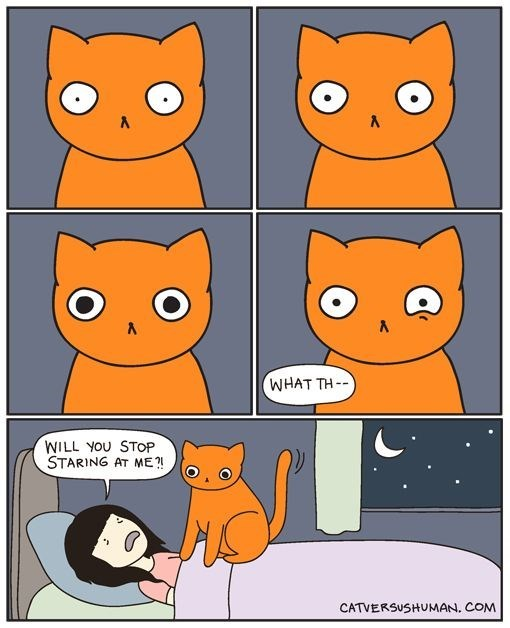 Cartoon about a cat watching you the whole night.