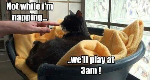 Meme about a cat not wanting to play all day, just at 3 am in the morning.