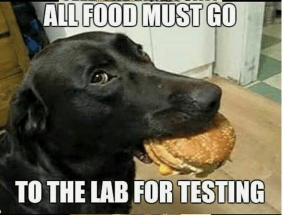dog with burger in his mouth and caption that all food must go to the lab for testing.