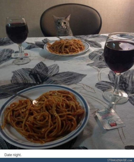 Cat sitting at a table enjoying a fancy dinner.