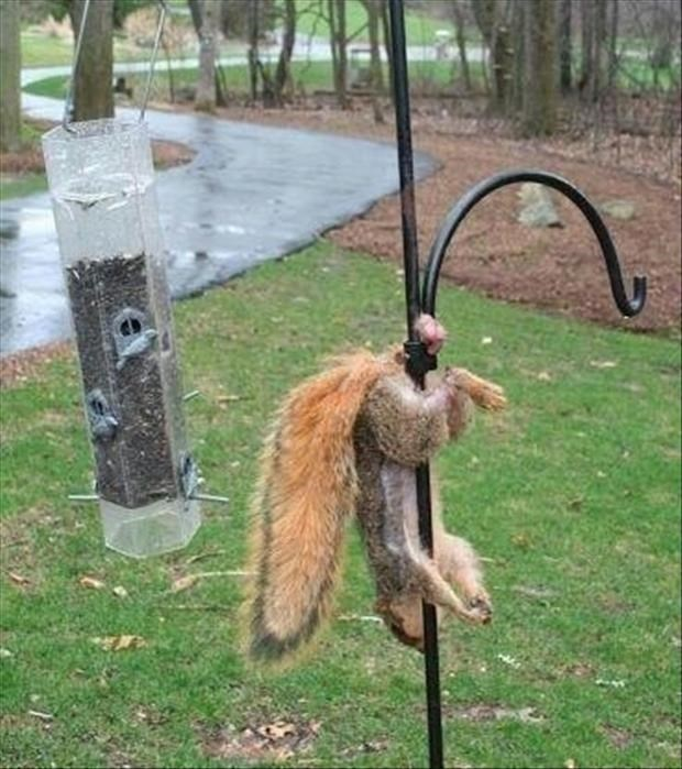 Funny picture of a squirrel that is getting the nut out of there.